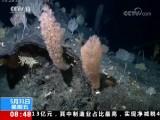 """""""科学""""号探秘马里亚纳海沟南侧海山 发现近10处罕见的""""海底花园"""""""