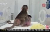 世界首例体细胞克隆猴在中国诞生:可获得针对人类疾病更好治疗方法和药物