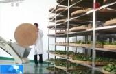 农业农村部:茶产业成为我国重要扶贫产业