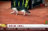 网球比赛 小猫闯入