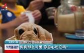 台湾网红小狗冰淇淋:狗狗那么可爱 你忍心吃它吗?
