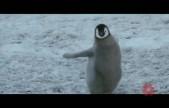 帝企鹅日记2:召唤 终极预告