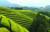 全球新增绿化四分之一来自中国  美国研究人员发表最新科研成果
