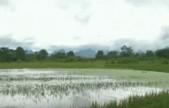 广西多地暴雨:河流超警 村庄变孤岛