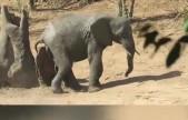 小象为挠痒痒不停换姿势 像极了挠不对地方的你
