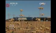 列车西进 读秒时代 (西行列车一)(7.2焦点访谈)