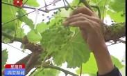 转变农业发展方式 加快发展现代农业