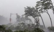 """台风""""莫兰蒂""""在厦门登陆 狂风大作树木剧烈摇晃"""