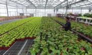 木禾林农业生态园:完整产业链打造一体化现代花卉产业园区