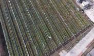 """和牧现代农业园区:打造""""畜-沼-果""""循环农业示范园"""