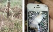 江西现电网猎捕动物 电压达1万伏长2公里