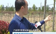 渭河户县段增绿三千株 为保成活率主种小树苗