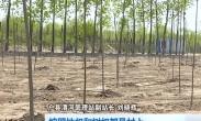 植树增绿 不能重种轻养(1)