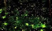 海口紧急叫停萤火虫文化节 盲目放生影响生态
