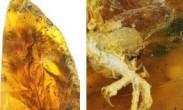 距今9900万年:人类首次在琥珀中发现古雏鸟