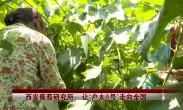 """西安葡萄研究所:让""""户太8号""""走向全国"""