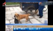 狗狗帮清洁工主人捡垃圾 3年风雨无阻