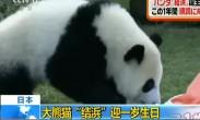 """日本:大熊猫""""结浜""""迎一岁生日"""