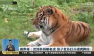 女饲养员喂老虎 笼子意外打开遭虎撕咬