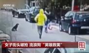 """女子街头被抢 流浪狗""""英雄救美"""""""