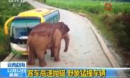 客车高速抛锚 野象猛撞车辆