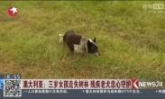 澳大利亚:三岁女孩走失树林 残疾老犬忠心守护