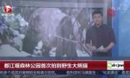 都江堰森林公园首次拍到野生大熊猫
