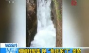 """陕西宝鸡:细鳞鲑聚集 现""""鱼跃龙门""""景象"""