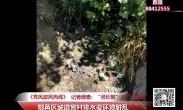 """20180608记者调查:鄠邑区城道宫村排水渠环境脏乱  """"河长制""""成""""空招牌"""""""