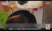 关注极端天气 韩国:高温致枕头自燃 鸡蛋孵出小鸡