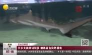 五岁女孩商场玩耍 遭遇鲨鱼突然袭击