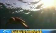 科学家发现全新原始龟类
