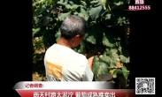 20180731记者调查:雨天村路太泥泞 葡萄成熟难卖出