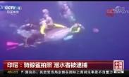 骑鲸鲨拍照 潜水者被逮捕