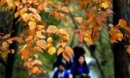 中国多地大幅降温 局地将达10度以上