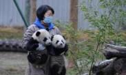 首对野外引种大熊猫双胞胎亮相