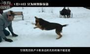"""这条狗激发了网友的""""返乡""""动力"""