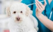 全国人大代表建议-狂犬疫苗强制免费打狗身上