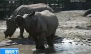 亚洲独角犀牛在国内首展