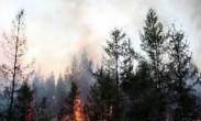 俄罗斯_远东地区发生大规模森林火灾