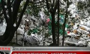 记者调查 :偷盗垃圾毁坏树林 村民急盼解决
