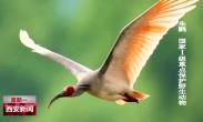 关爱秦岭 保护野生动植物 秦岭——鸟儿的天堂