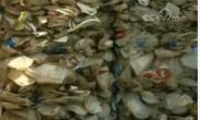"""马来西亚拒收3000吨非法""""洋垃圾"""""""
