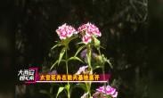 大万博体育max官网嫽扎咧 太空花卉在航天基地盛开