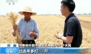 全国夏收过三成 收小麦超一亿亩