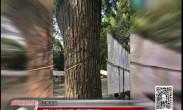 记者调查:部分城市公园 管护不到位