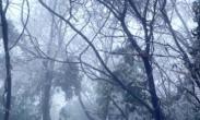 一夜入冬!张家界漫山雾凇成冰雪世界 游客:只看一眼就心动