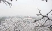 广东男子从北京寄雪人回家 快递小哥-这是我取过最特别的件