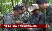云南保山:超20只云猫在高黎贡山活动