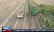 农业农村部:社会化服务组织助力农民增产增收